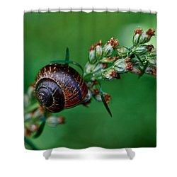 Copse Snail Shower Curtain by Jouko Lehto