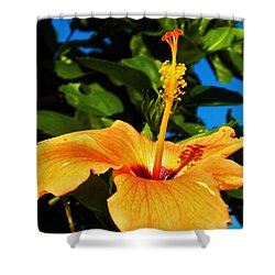 Shower Curtain featuring the photograph Untouched Beauty by Faith Williams