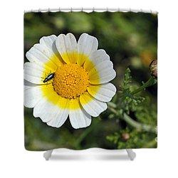 Crown Daisy Flower Shower Curtain by George Atsametakis