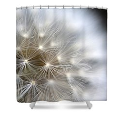 Dandelion Backlit Close Up Shower Curtain