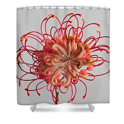 Shower Curtain featuring the photograph Grevillea Flower by Shirley Mitchell