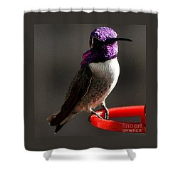 Shower Curtain featuring the photograph Male Costa's On Perch by Jay Milo