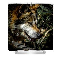 Mexican Grey Wolf Shower Curtain by Ernie Echols