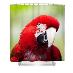 Parrot Shower Curtain by Sebastian Musial