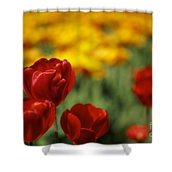 Red And Yellow Tulips Shower Curtain by Nailia Schwarz