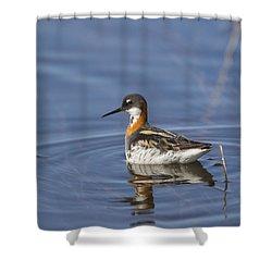 Rednecked Phalarope Shower Curtain