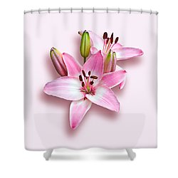 Spray Of Pink Lilies Shower Curtain by Jane McIlroy