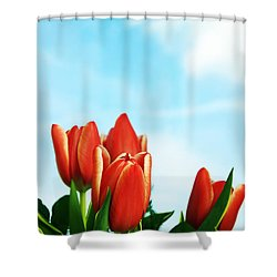 Tulips Background Shower Curtain by Michal Bednarek