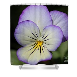 Viola Named Sorbet Lemon Blueberry Swirl Shower Curtain by J McCombie