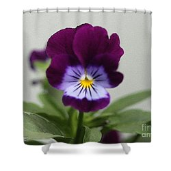 Viola Named Sorbet Plum Velvet Jump-up Shower Curtain by J McCombie