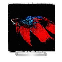 4 Virtues Siamese Fighting Fish #2 Shower Curtain
