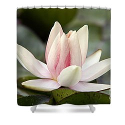 Waterlily Shower Curtain by Michal Boubin