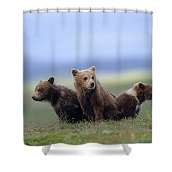 4 Young Brown Bear Cubs Huddled Shower Curtain by Eberhard Brunner