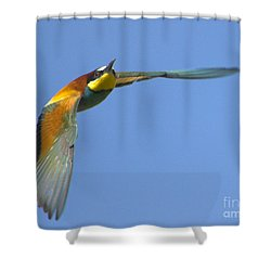 Abejaruco Shower Curtain by Guido Montanes Castillo