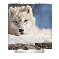 Arctic Wolf Pup Shower Curtain