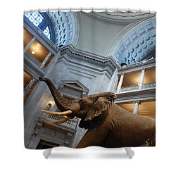 Bull Elephant In Natural History Rotunda Shower Curtain