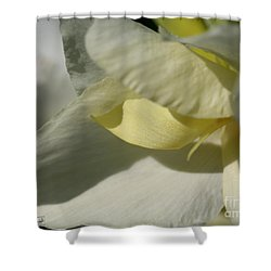 Dwarf Canna Lily Named Ermine Shower Curtain by J McCombie