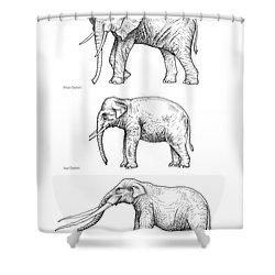Elephant Evolution, Artwork Shower Curtain