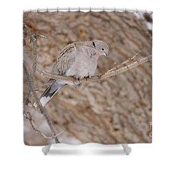 Euarsian Collard Dove Shower Curtain by Lori Tordsen