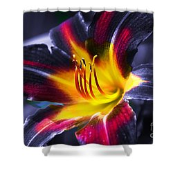 Flower Burst Shower Curtain by Gunter Nezhoda