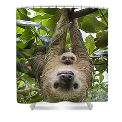 Shower Curtain featuring the photograph Hoffmanns Two-toed Sloth And Old Baby by Suzi Eszterhas
