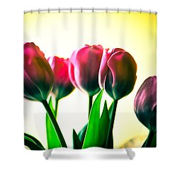 5 Pink Tulips Shower Curtain