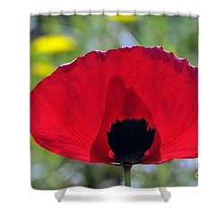 Poppy Flower Shower Curtain by George Atsametakis