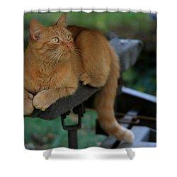 5-toe'd Orange Cat Of The Marina Shower Curtain