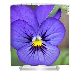 Viola Named Sorbet Blue Heaven Jump-up Shower Curtain by J McCombie