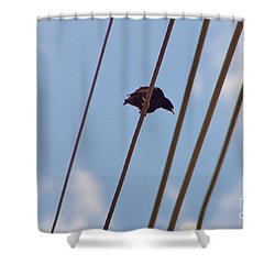 5 Wire Shower Curtain