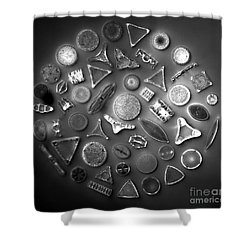 50 Diatom Species Arranged  Shower Curtain by Science Source