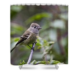 Alder Flycatcher Shower Curtain