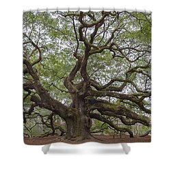 Sc Angel Oak Tree Shower Curtain