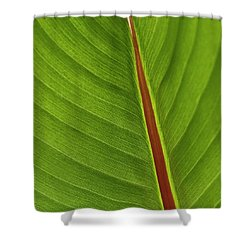 Banana Leaf Shower Curtain by Heiko Koehrer-Wagner