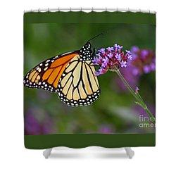 Monarch Butterfly In Garden Shower Curtain