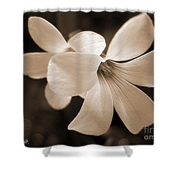 Oxalis Triangularis Or Burgundy Shamrock Shower Curtain