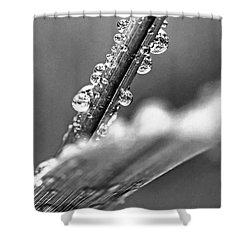 Raindrops On Grass Shower Curtain by Elena Elisseeva