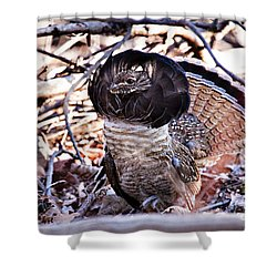 Ruffed Grouse Shower Curtain