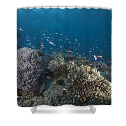 Schooling Anthias Fish And Healthy Shower Curtain