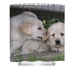 Yellow Labrador Retriever Puppies Shower Curtain by Linda Freshwaters Arndt