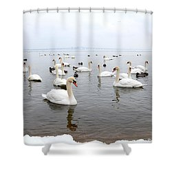 60 Swans A Swimming Shower Curtain