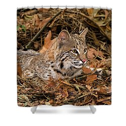 611000006 Bobcat Felis Rufus Wildlife Rescue Shower Curtain by Dave Welling