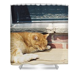 #665 03 Catnap  Shower Curtain by Robin Lee Mccarthy Photography