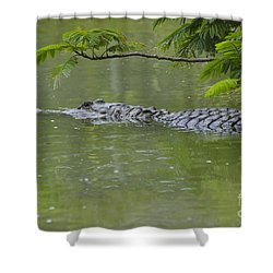 American Alligator Shower Curtain by Mark Newman