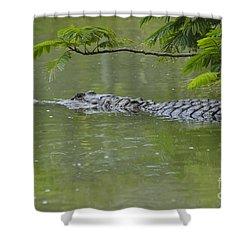 American Alligator Shower Curtain by Mark Newman