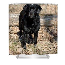 Black Labrador Retriever Shower Curtain by Linda Freshwaters Arndt