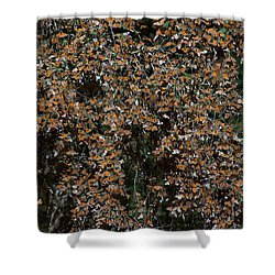 Monarch Butterflies Shower Curtain by Carol Ailles