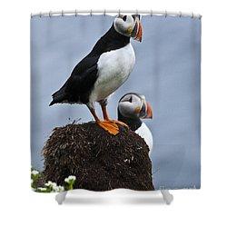 Puffins Shower Curtain by Heiko Koehrer-Wagner