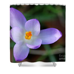 Vibrant Spring Crocus Shower Curtain