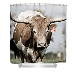 72 Shower Curtain by Swift Family